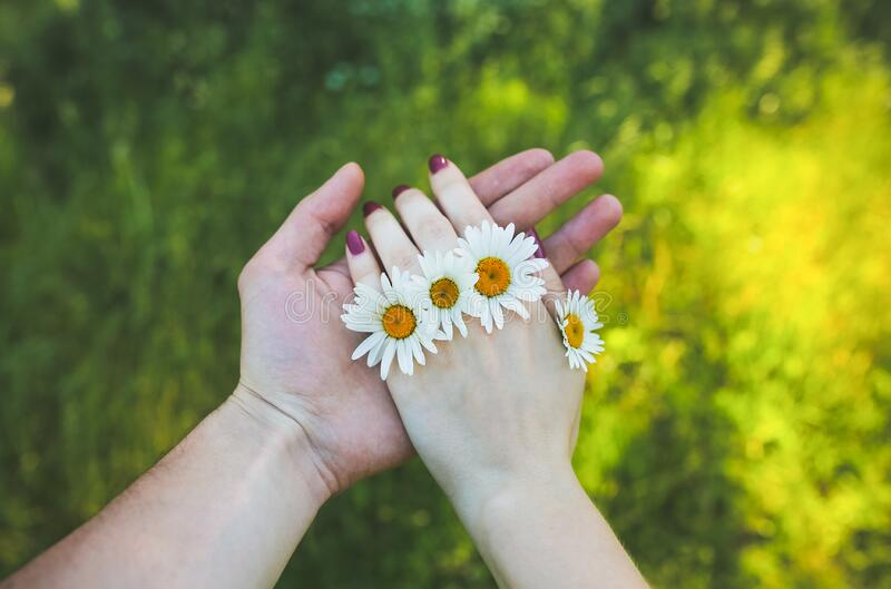 Man is holding woman`s hand with camomile flowers are in the fingers. Nature harmony and beauty concept. Summer couple photo. royalty free stock image