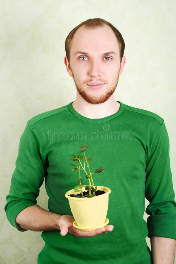 Man holding yellow flowerpot with Kalanchoe plant royalty free stock image