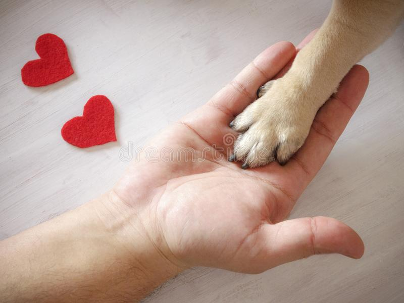 Man holds the dog`s paw with love. Red hearts on white background. Man holds the dog`s paw with love. Red hearts on a white background royalty free stock photo