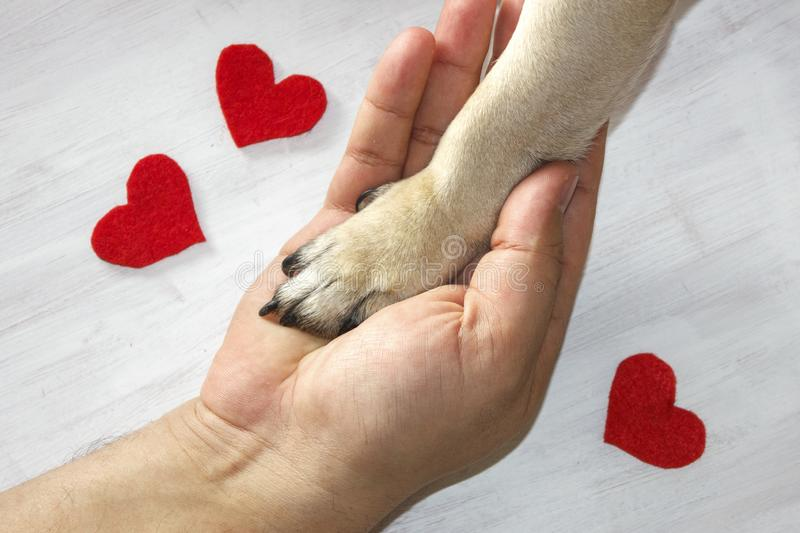 Man holds the dog`s paw with love. Red hearts on white background. Man holds the dog`s paw with love. Red hearts on a white background stock photo