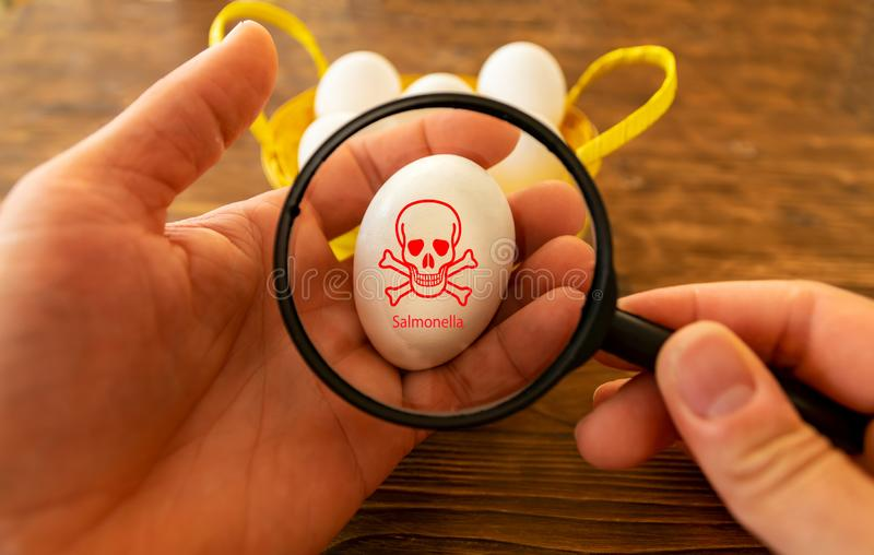 A man holds an egg in his hand and looks at it with a magnifying glass. There are salmonella on the egg. Man holds an egg in his hand and looks at it with a royalty free stock images