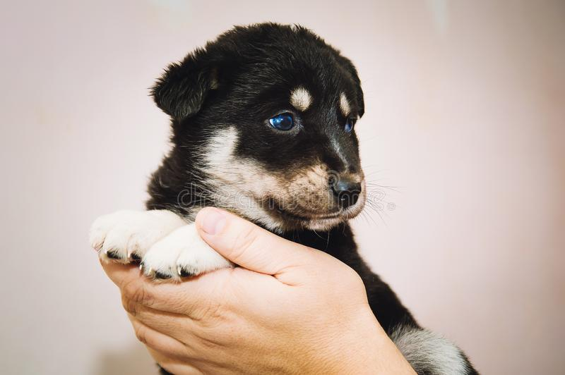The man holds in his arms a cute little puppy of mixed breed. Close-up royalty free stock photos