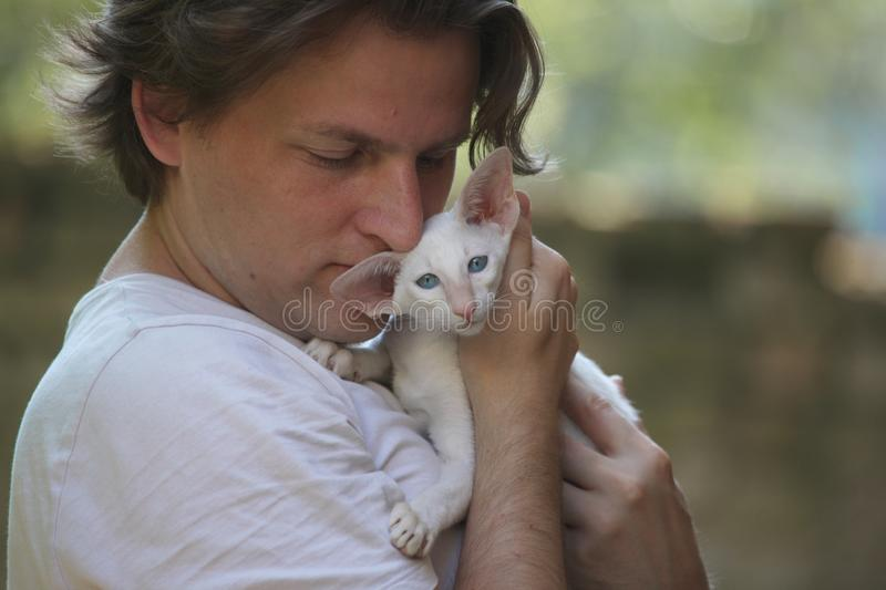 A man holds a kitten of a Siamese breed. Of light color royalty free stock image