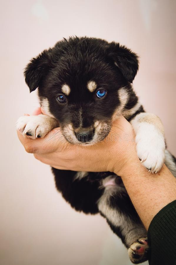 A man holds a mixed breed puppy. Vertical photo. A man holds a mixed breed puppy. Vertical stock photography