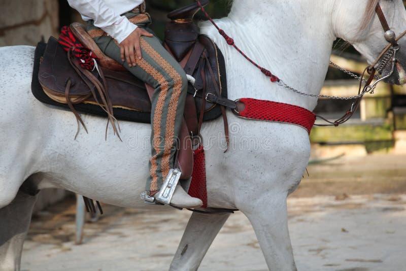 Man on horse saddle royalty free stock photography