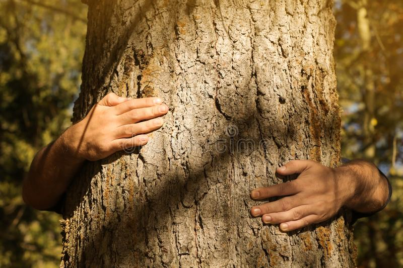 Man hugging tree in forest. On sunny day stock photos
