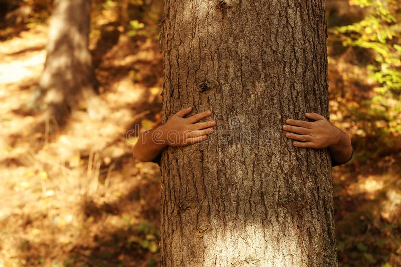 Man hugging tree in forest. On sunny day royalty free stock images