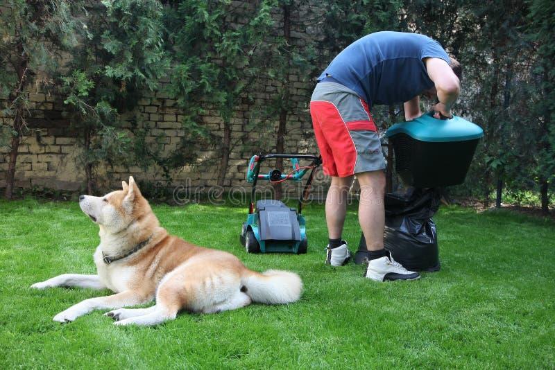 Man, hund och gräsklippare arkivfoton