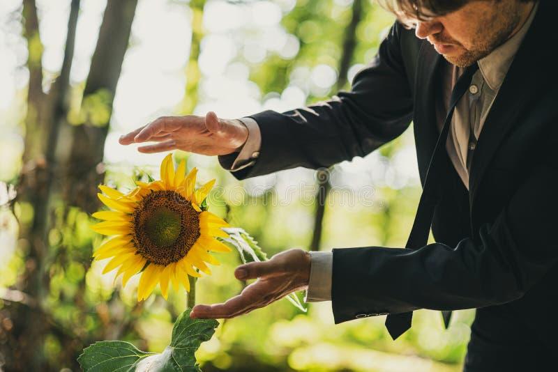Man i affärsdräkten som rymmer hans händer runt om solrosen royaltyfria foton