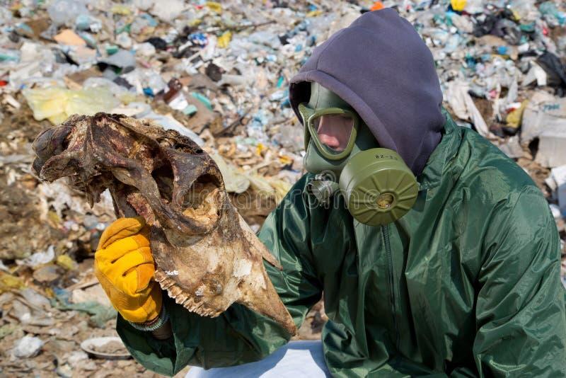 Man i en gasmask som ser det djura skelettet royaltyfria foton