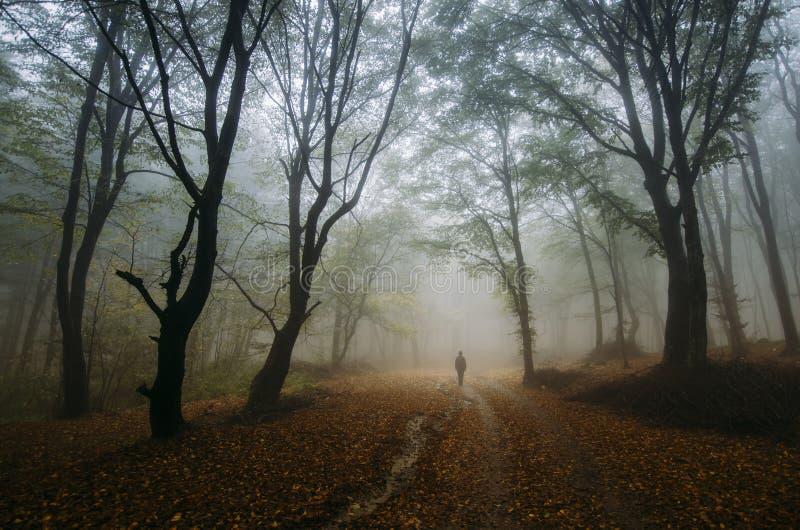 Man i magisk förtrollad fantasiskog med dimma royaltyfri fotografi