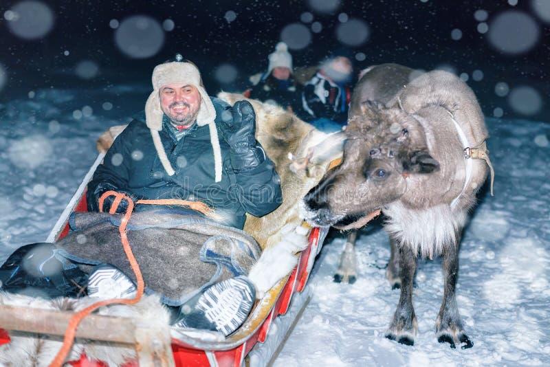 Man i renpulka på nattsafari i Lapland Finland arkivbilder