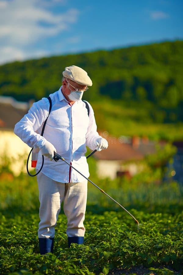 Man i skyddande kläder som besprutar insekticid på potatisar royaltyfri fotografi