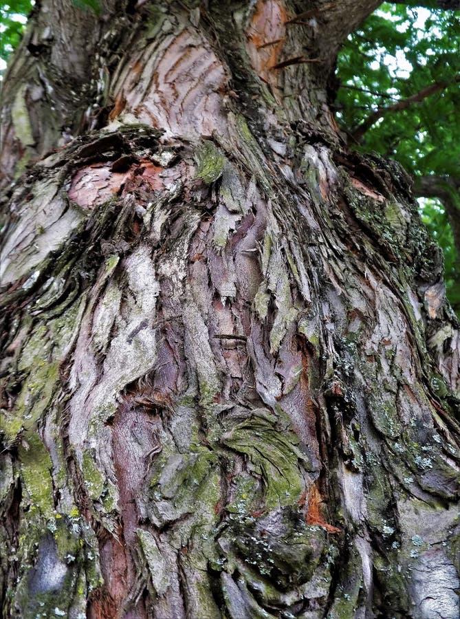 Man i trädet arkivfoto