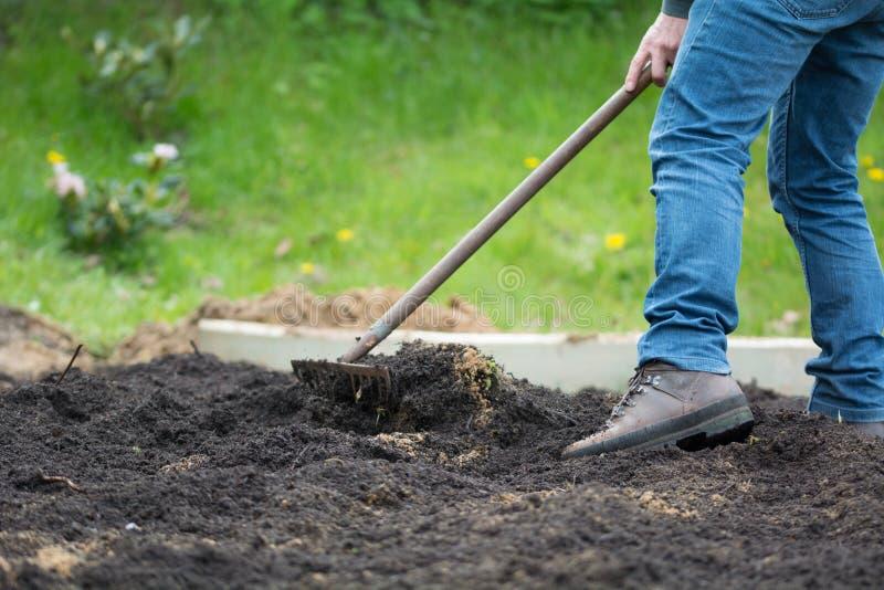 Man i trädgårds- arbete i rabatt med en kratta arkivfoto