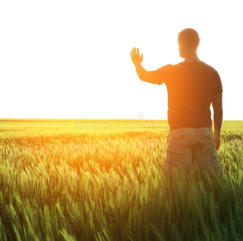 Man i vetefält och solljus royaltyfri foto