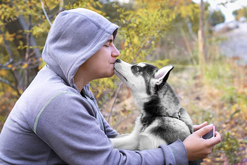 Man kisses  dog puppy of the breed Siberian Husky. dog training and obedience.  royalty free stock photo