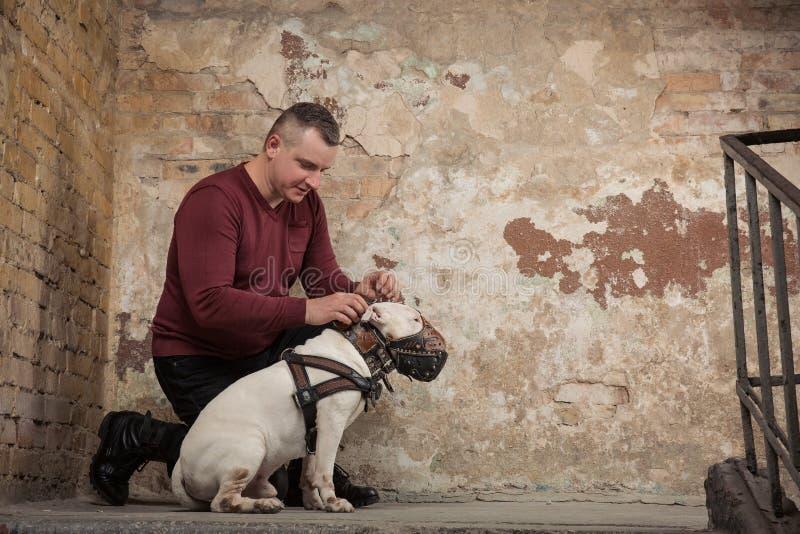 Man knappen upp en hundhalsband mot bakgrunden av en skalningsvägg Stående av mannen och vit bull terrier Hundinstruktör arkivfoto