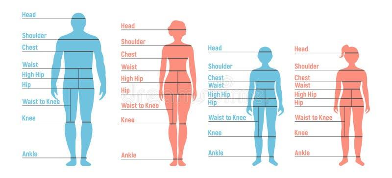 Man-, kvinna-, pojke- och flickaformatdiagram Mänsklig kontur för främre sida royaltyfri illustrationer