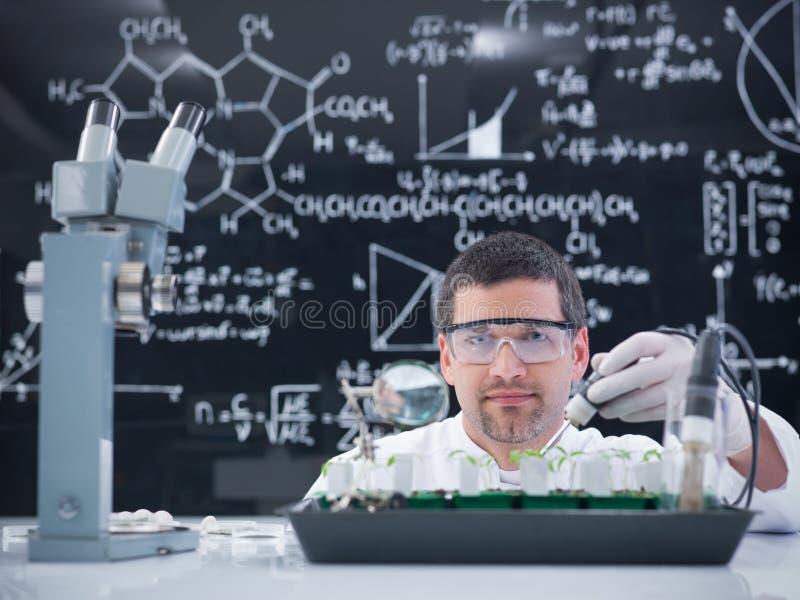 Man lab plant experiment royalty free stock photo