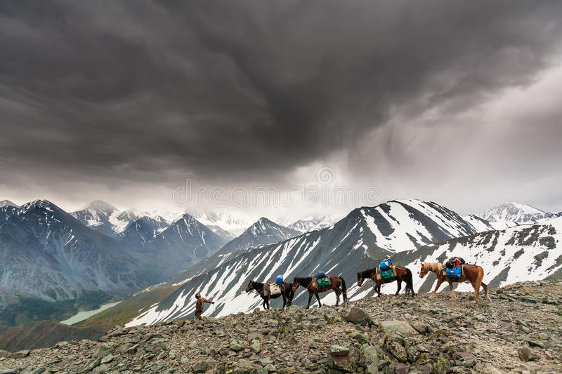 Man leads several horses on the high mountain. Pass near Belukha mountain in Altai stock photo