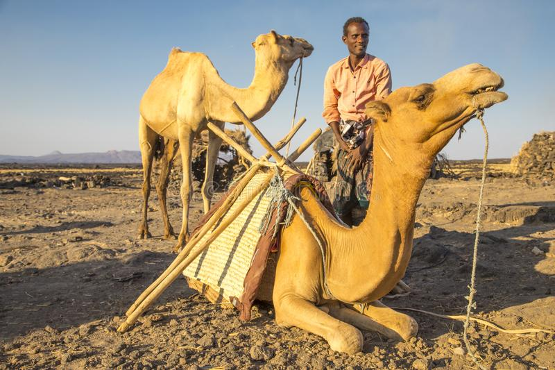 Man loading his camels at the Erta Ale base camp for the night`s trek up to the volcano. stock photo