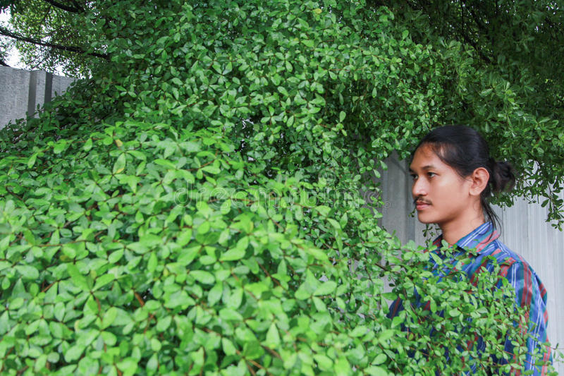 A man with a Long hair and a mustache peeking out from the bushes of Terminalia ivorensis Chev bedew stock image