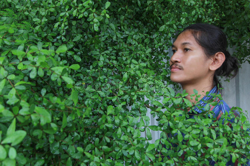 A man with a Long hair and a mustache peeking out from the bushes of Terminalia ivorensis Chev bedew royalty free stock photos