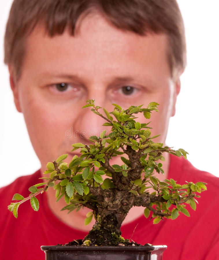 Man is looking at a bonsai tree royalty free stock photography