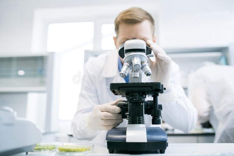 Man looking at microscope in laboratory stock photos