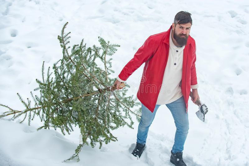 Man lumberman with Christmas tree in winter park. Happy winter time. Bearded Man cutting Christmas tree. Happy father royalty free stock images