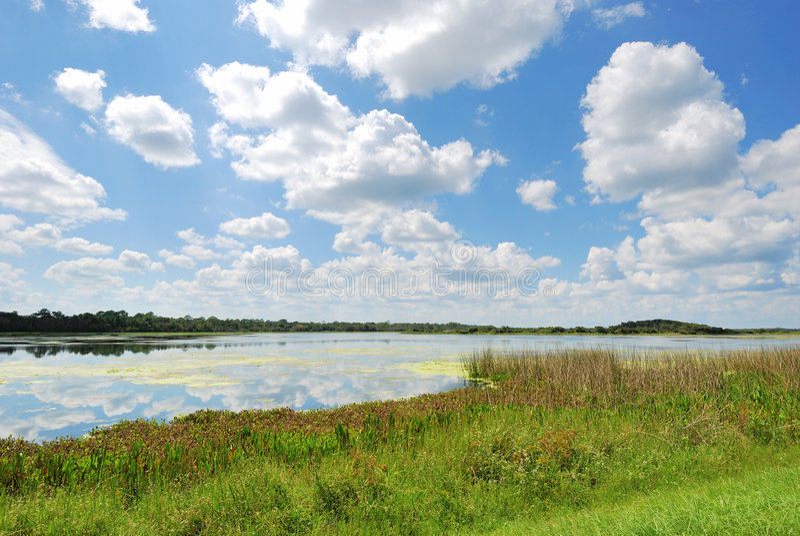 Man-made Wetlands- Orlando Wetlands Park royalty free stock image