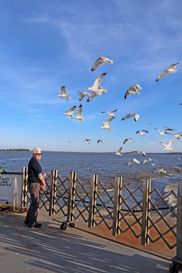 Man matande havsfiskmåsar från enSkottland färja royaltyfri foto