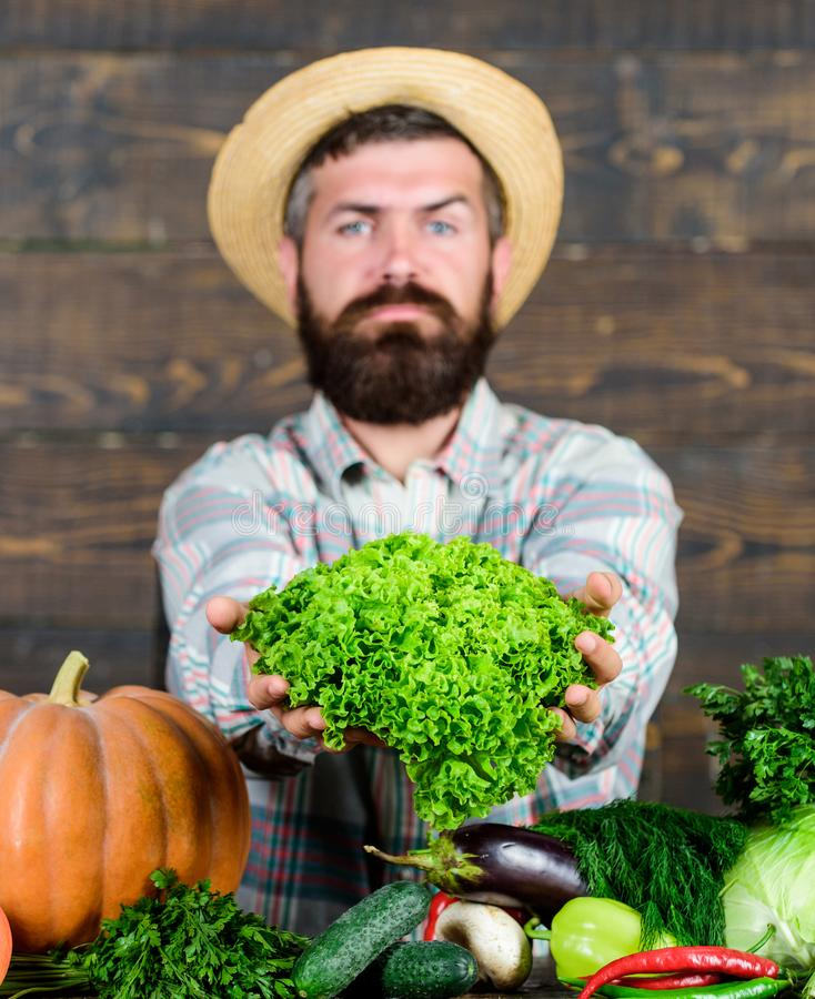 Man mature bearded farmer hold vegetables wooden background. Sell vegetables. Local market. Locally grown crops concept. Buy vegetables local farm. Typical stock photos
