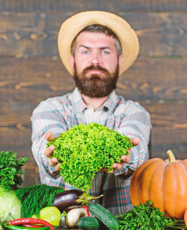 Man mature bearded farmer hold vegetables wooden background. Sell vegetables. Local market. Locally grown crops concept. Buy vegetables local farm. Typical stock images