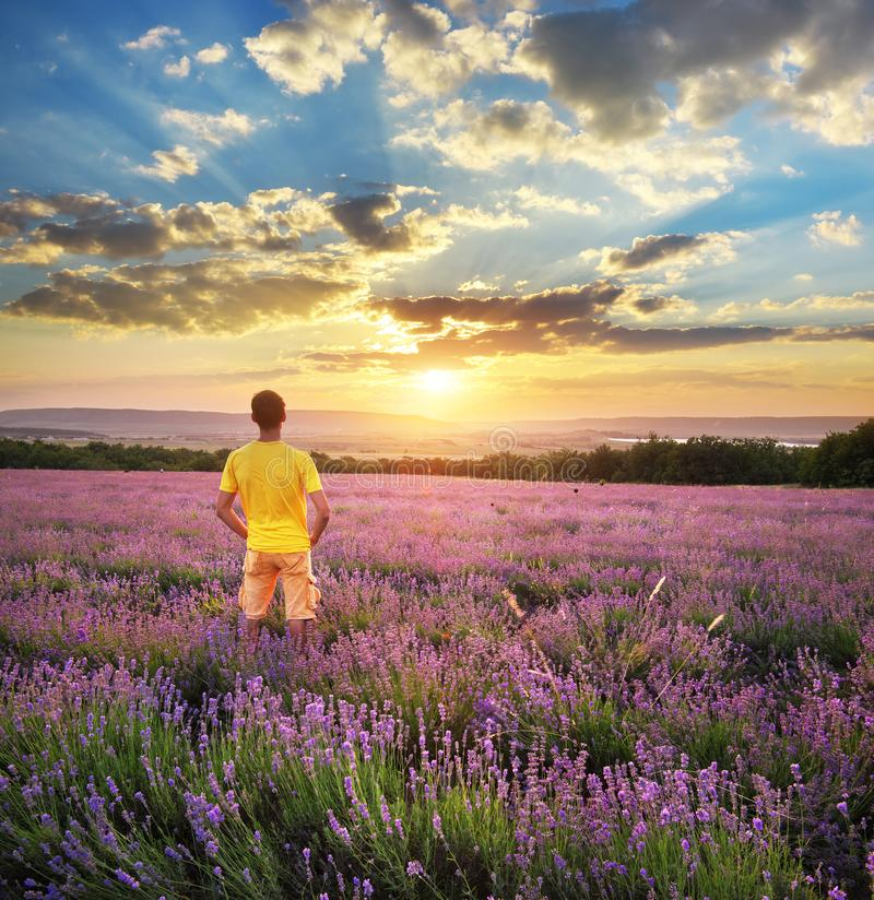 Man in meadow of lavender royalty free stock photography