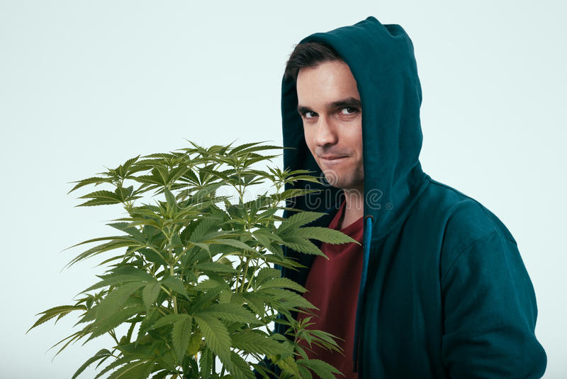 Man med cannabisväxten arkivbild