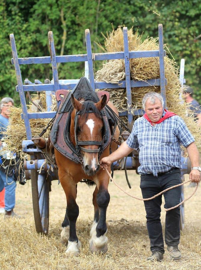 Man med en häst och en vagn på stora festen de la Moisson på helgonet Denis de Gastines 2018 fotografering för bildbyråer
