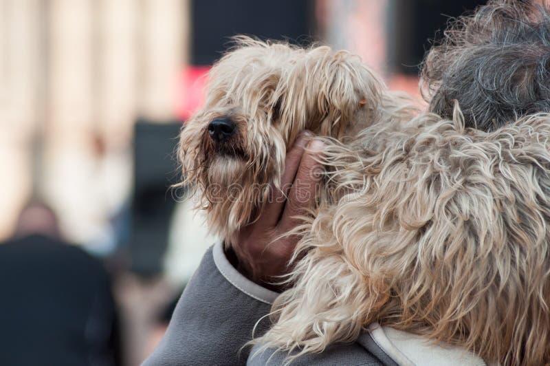 man med hunden på skuldra i utomhus- arkivbilder