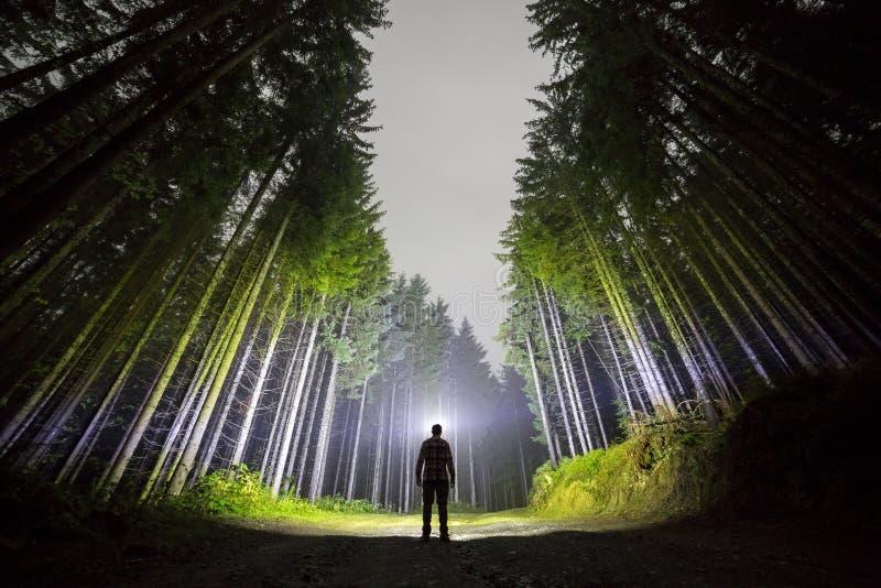 Man med huvudficklampaanseende på skogvägen bland högväxt gran royaltyfri foto