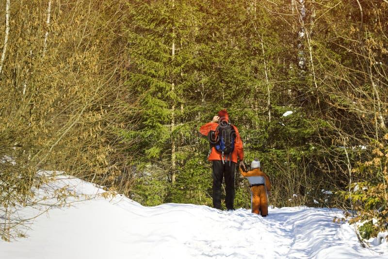 Man med ryggsäck- och sonställningar mot bakgrunden av barrträd i skogvinterdagen tillbaka sikt fotografering för bildbyråer