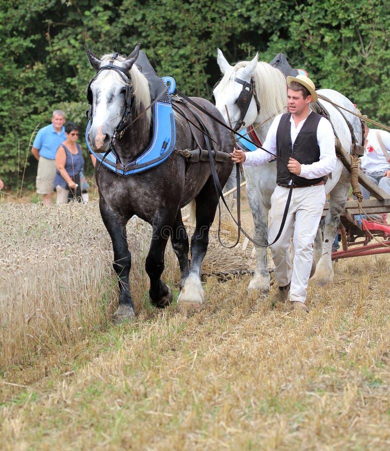 Man med två hästar som drar en vagn på stora festen de la Moisson på helgonet Denis de Gastines 2018 arkivbild