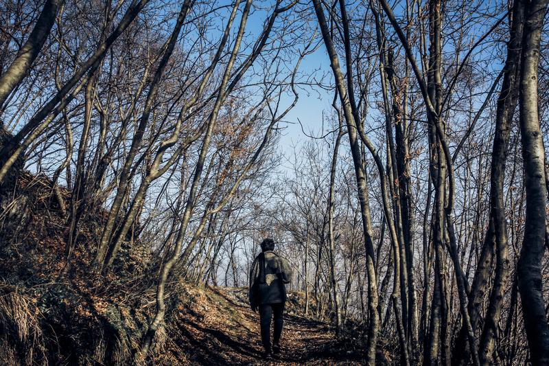 Man in Middle of Forest royalty free stock photo