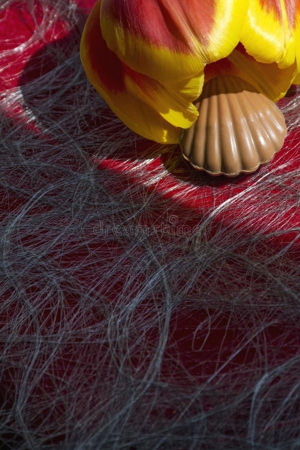 Man mjölkar chokladgodisen i form av skalet med tulpan på den röda bakgrunden i solljuset royaltyfri bild
