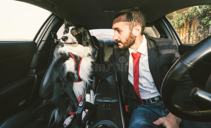 Man motivate his dog before canine competition royalty free stock image