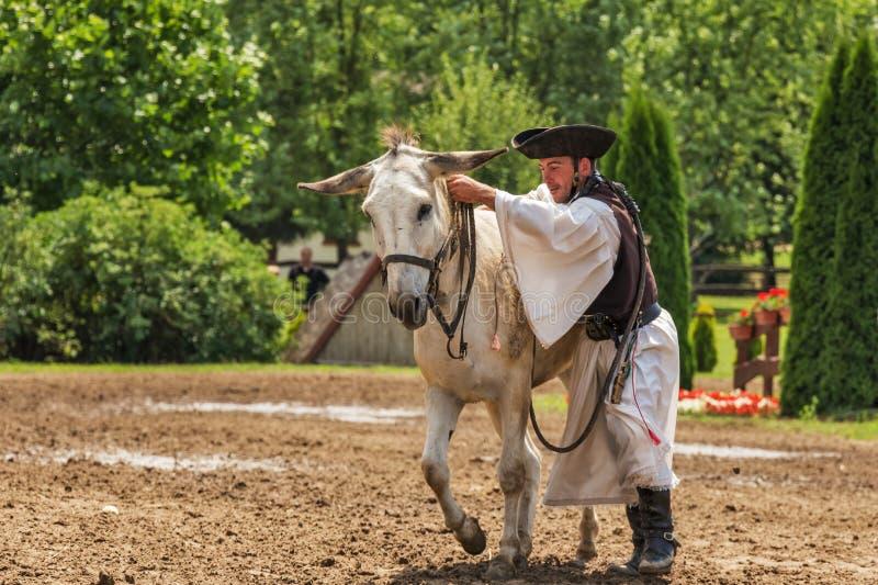 Man mounting a white donkey royalty free stock photography