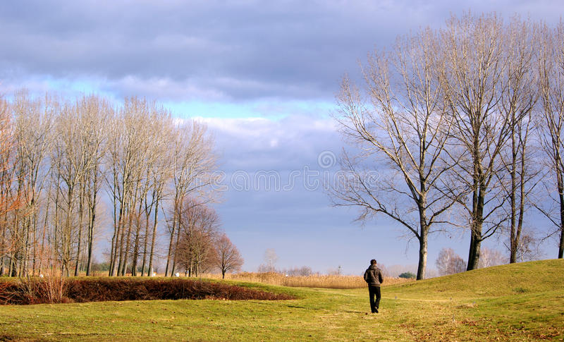 Man in nature royalty free stock images