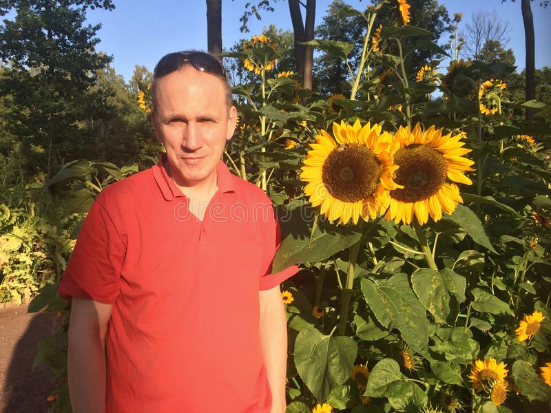 Man next to blooming sunflowers in the park royalty free stock photo