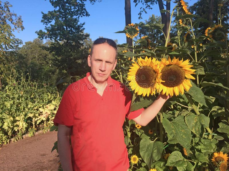 Man next to blooming sunflowers in the park royalty free stock images