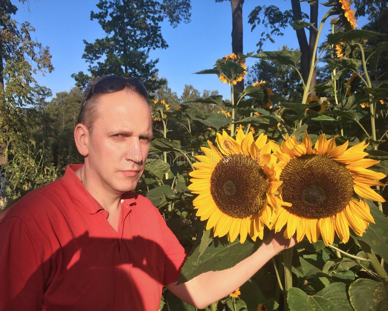 Man next to blooming sunflowers in the park stock image